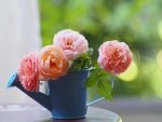 Rosas en un regadera