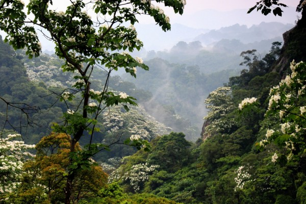Floración en un bosque con niebla