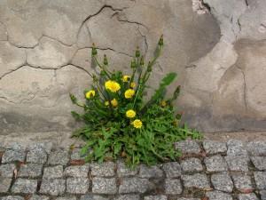 Planta con flores amarillas creciendo junto a una pared