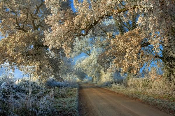 Helada sobre la carretera y los árboles