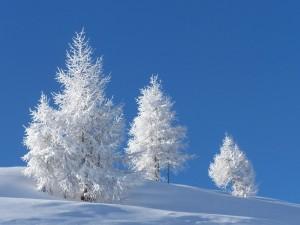 Paisaje invernal con árboles cubiertos de nieve