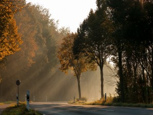 Carretera y árboles iluminados por los rayos del sol