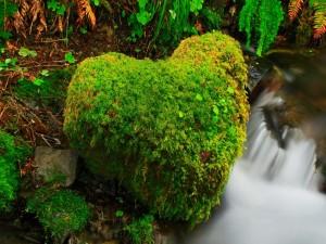Piedra con forma de corazón cubierta de musgo