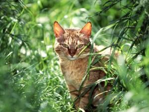 Un gato entre plantas verdes