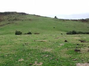 Caballos pastando en verdes prados