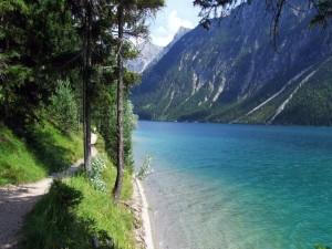 Río entre montañas cubiertas de pinos