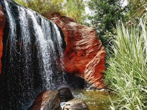 Cascada entre rocas, árboles y arbustos