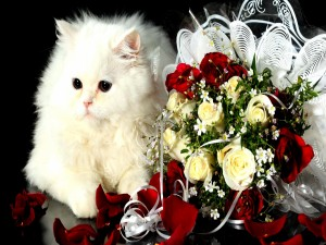 Gato blanco junto a un ramo de novia