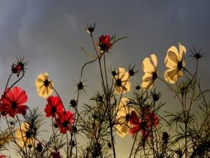 Flores blancas y rojas iluminadas por el sol
