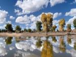 Árboles y nubes reflejados en un estanque en calma