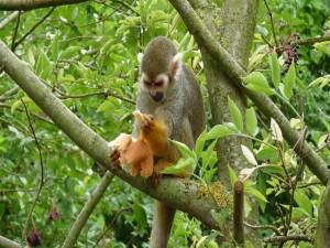 Mono comiendo pan