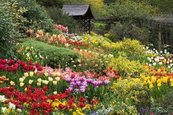 Tulipanes entre arbustos en un bonito jardín
