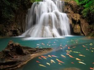 Peces bajo una hermosa cascada