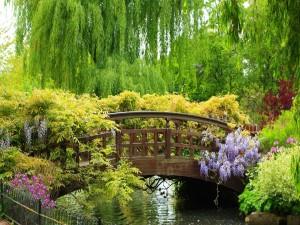 Un bonito puente cubierto de vegetación