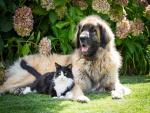 Gato y perro descansando en el jardín