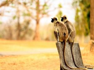 Dos monos sentados