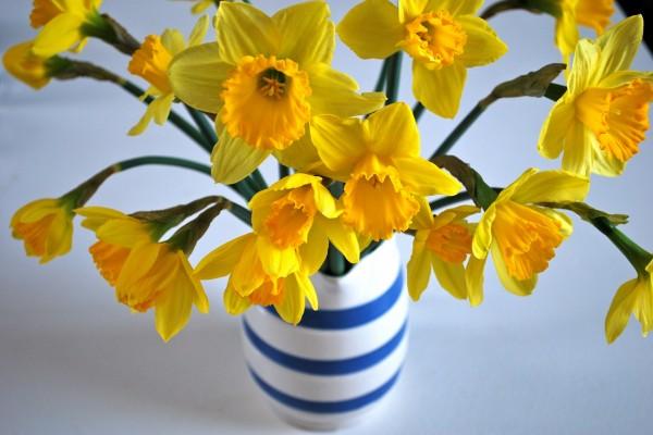 Narcisos amarillos en un florero
