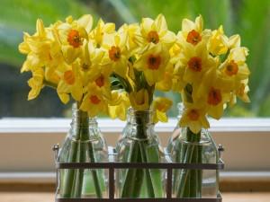 Tres ramos de narcisos en recipientes transparentes