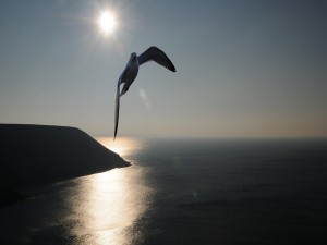 Vuelo de una gaviota sobre el mar