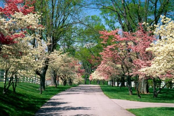 Árboles en flor junto a una carretera