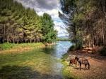 Caballos pastando junto a un río