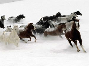 Manada de caballos corriendo en la nieve