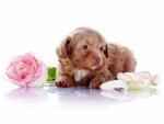 Un adorable perrito junto a una rosa