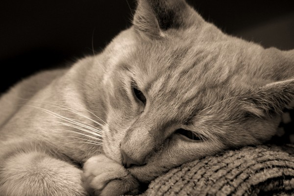 Un bonito gato descansando