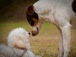 Perros frente a frente