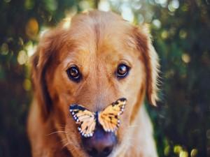 Mariposa posada en el hocico de un perro