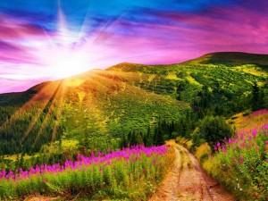 Sol brillando sobre un hermoso campo