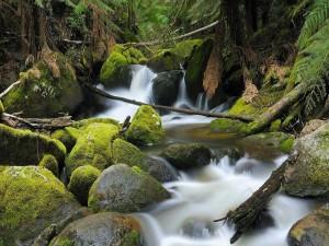 Rocas con musgo en el cauce de un río