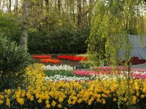 Narcisos y tulipanes en un jardín