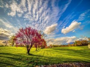 Cielo nuboso sobre un bonito campo