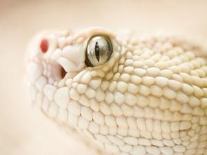 Cabeza de una serpiente blanca