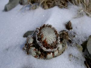 Planta creciendo entre la fría nieve