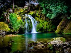 Agua de una cascada bañando las rocas verdes