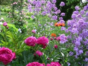 Hermosas flores en un jardín