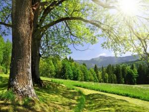 Sol iluminando las ramas de los árboles
