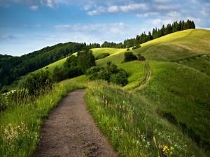 Sendero en una montaña verde