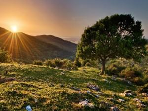 El sol iluminando el campo al amanecer