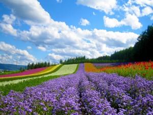 Campo con flores de varios colores
