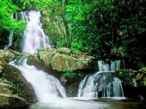 Maravillosas cascadas en un bosque
