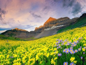 Hermosas flores a los pies de las montañas