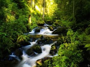 Pequeño río en un bosque
