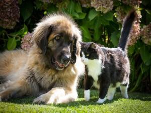 Bonita amistad entre un perro y un gato