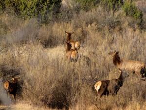 Grupo de corzos entre los arbustos