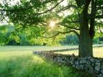 Sol tras las ramas de un gran árbol
