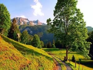 Montañas vistas desde un camino