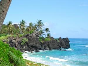 Rocas y palmeras en la costa